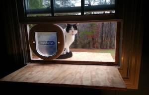 gatto-finestra